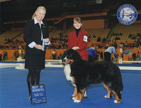 BMDCA Specialty Rhapsody Bernese Mountain Dogs Bernese Dog Puppy Breeder in California puppies